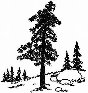 Pine Tree | ClipArt ETC