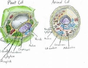 Plants  Animal Cell And Animals On Pinterest