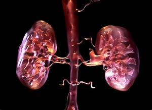 Synthetic Organs: We're One Step Closer to Having ...