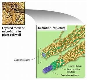 Image  Cellulose  Processed By Microbes Into Ethanol