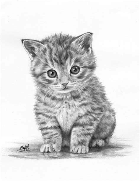 Drawn Kitten Pencil Drawing  Pencil And In Color Drawn
