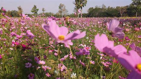 เที่ยวสวนดอกไม้ มทร.อีสาน - YouTube