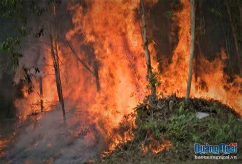 Khuyến mãi đặc biệt các khách sạn quảng ngãi, việt nam. Quảng Ngãi: Cảnh báo nguy cơ cháy rừng ở cấp cực kỳ nguy ...