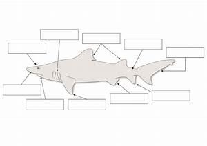 Shark Lesson Plans  U0026 Worksheets