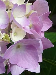 Light purple flowers public domain free photos for ...