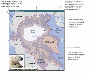 Freedawn Scientia  In The Life Of A Polar Bear