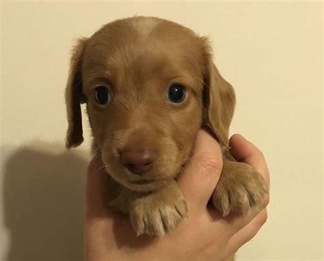 Images Of Wiener Dogs Wiener Www Pixshark Images Galleries With A Bite