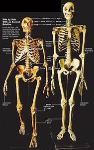 The-Nephilim-Skeleton-Explained-Neanderthal-Ancient-Giants ...