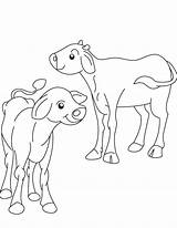Coloring Ox Calf Pages Popular sketch template