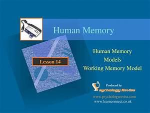 Cognitive, Psychology, -, Working, Memory, Model, By, Ashraf, Hassim