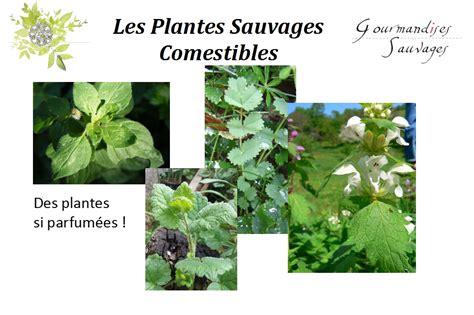 cuisine plantes sauvages comestibles permaculture nature