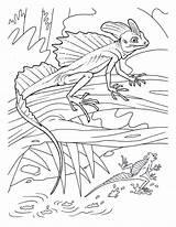 Basilisk Lizards Creepers Crawly Eidechse Colouringpages Salamander Ausmalbild Enjoycoloring Letzte sketch template