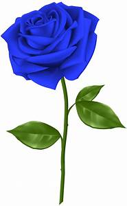 Blue Rose Transparent PNG Clip Art Gallery Yopriceville