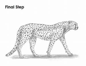 How To Draw A Realistic Cheetah