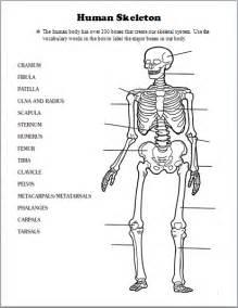 skeletal system human