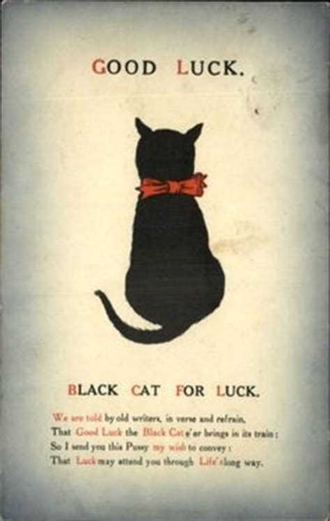 Good Luck Cat Meme - black cats good luck and cat memes on pinterest
