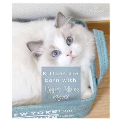 eyes born kittens eye weeks colour cats