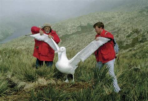 uttermost definition the nearly effortless flight of the albatross ieee spectrum