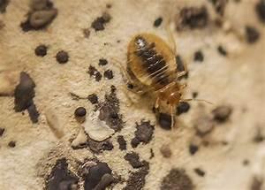 Insekten Im Zimmer Was Tun : was verursacht fehler im haus und was tun wenn sie pl tzlich auftauchen ~ Markanthonyermac.com Haus und Dekorationen
