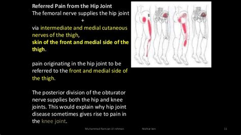 Clinical Anatomy Of The Lower Limb