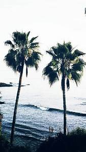 palm trees wallpaper | Tumblr