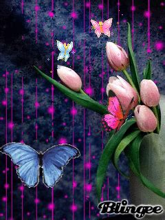Animated Wallpapers 240x320 Gif - animated wallpaper screensaver 240x320 for cellphone