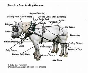 Parts Of A Mule Harness