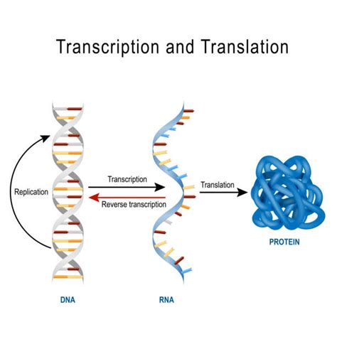 rna illustrations royalty  vector graphics