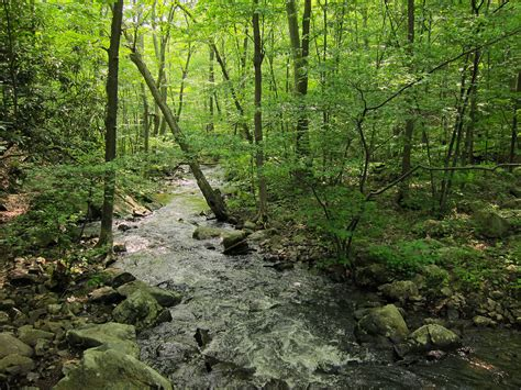 forest in usa northeastern coastal forests wikipedia