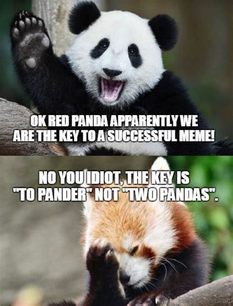 Meme Panda - 21 most cutest panda memes you never seen before greetyhunt
