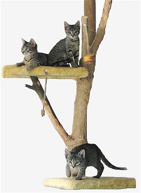 Kletterbaum Für Katzen by Kletterbaum