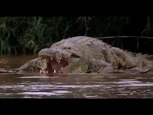 Burundi Deadliest Crocodile (Tanganyika) - YouTube