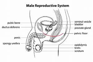 Men U2019s Health And The Pelvic Floor