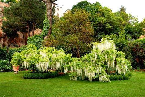 progetti piccoli giardini privati progetti giardini privati progettazione giardini