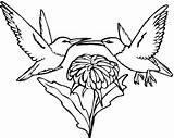 Coloring Hummingbird Flower Hummingbirds Picaflor Colorear Beija Flor Printable Flores Colorir Kolibri Desenhos Coloriage Dibujos Pintar Dibujo Imprimir Imprimer Ausmalbilder sketch template