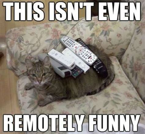 Meme Pun - is this remotely funny funny cat pictures with captions