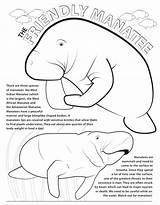 Coloring Manatee Dugong Archaicawful Printable Manatees Azcoloring Graphic Activity Popular sketch template