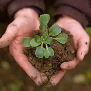 Ich Suche Garten : hallo leute ich suche ein bild auf dem zwei h nde zu sehen sind in deren mitte eine pflanze ~ Whattoseeinmadrid.com Haus und Dekorationen