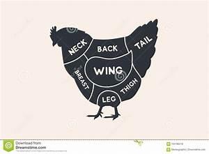 Chicken Cuts  Butchers Cheme Cutting Meat Illustration