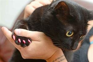 Anti Griffe Chat : protege griffes pour chats ~ Premium-room.com Idées de Décoration