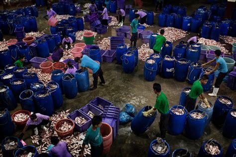 sea slaves  human misery  feeds pets