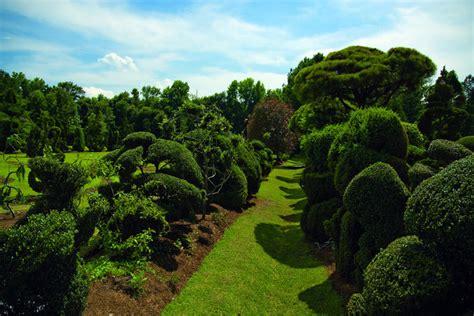 pearl fryar pearl fryar topiary garden the garden conservancy