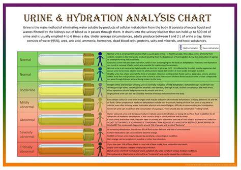 hydration level    urine lara jezeph