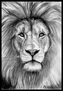 How to.... ?: how to draw realistic lion pictures