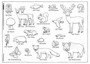 Download Als PDF Natur Wald Tiere Pflanzen Henkel