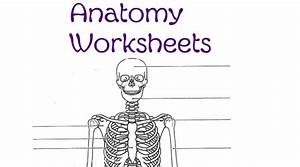 Anatomy Worksheets  U2013 Skip The School