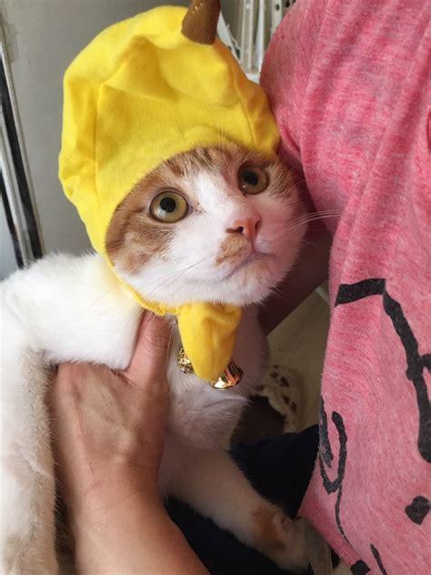 猫 じっと 見 て くる