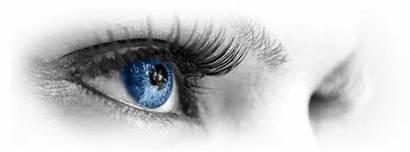Vision Business Company Maggiore Overview