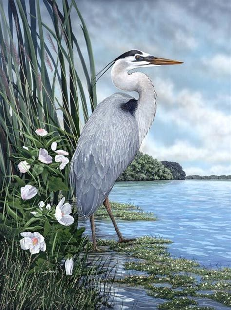 great blue heron painting great blue heron tattoo