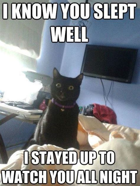 Funny Black Cat Memes - funny cat memes best cute kitten meme and pictures